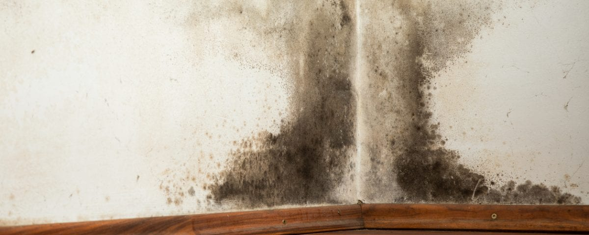 Could You Have Mold In Your Chimney Chimney Master Dallas